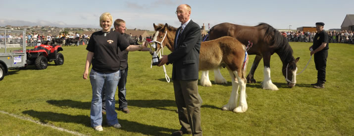 Winning Horses at the County Show in Kirkwall, Orkney