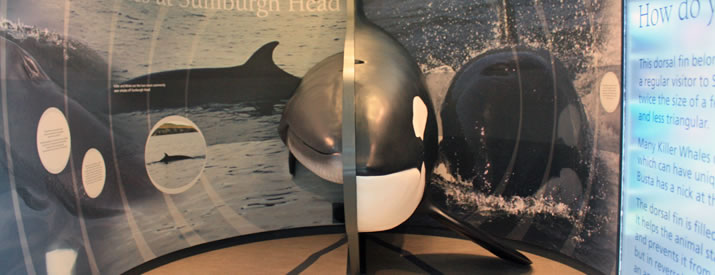 Sumburgh Head whale display