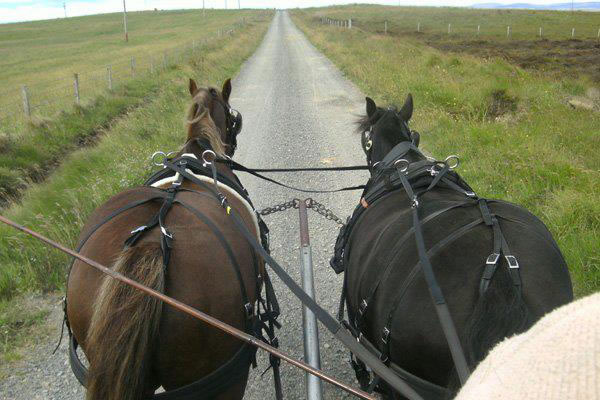 GairaDrivingPonies Orkney - Orkney Services