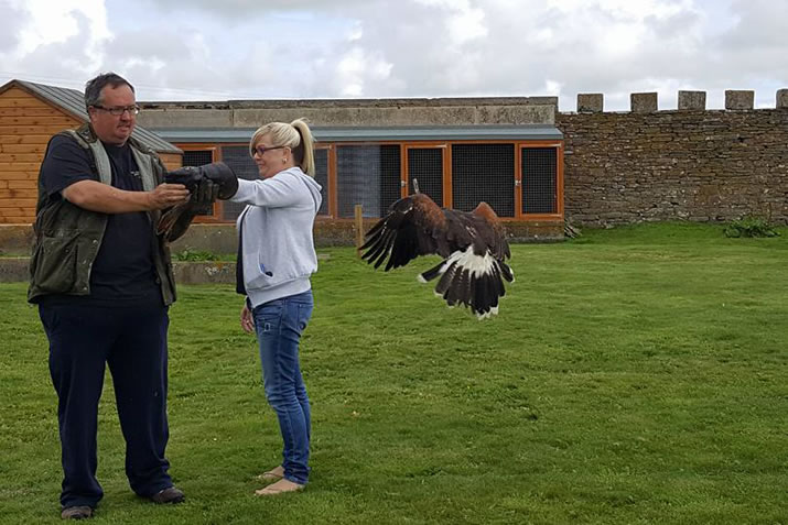 Flying display at Skaill House Falconry, Orkney