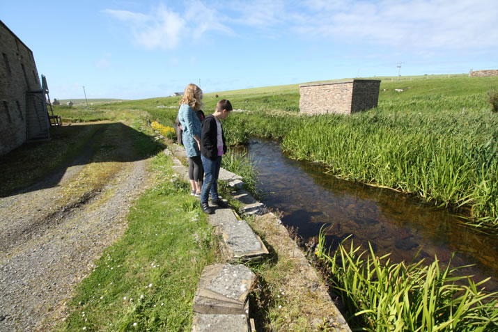 Looking at fish in the burn at the Barony Mill in Birsay, Orkney