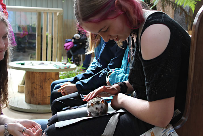 Handling a hedgehog at Fern Valley Wildlife Centre, Orkney