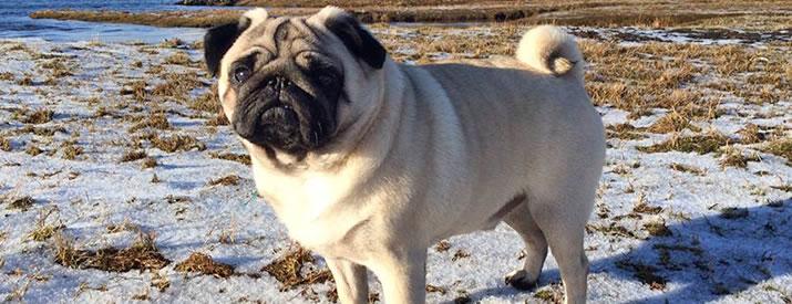 Dougal enjoys one of Shetland's fine dog walks