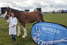 Georgie Hodgson Tilly the UKs most northerly Clydesdale sm - Sponsorship Recipients