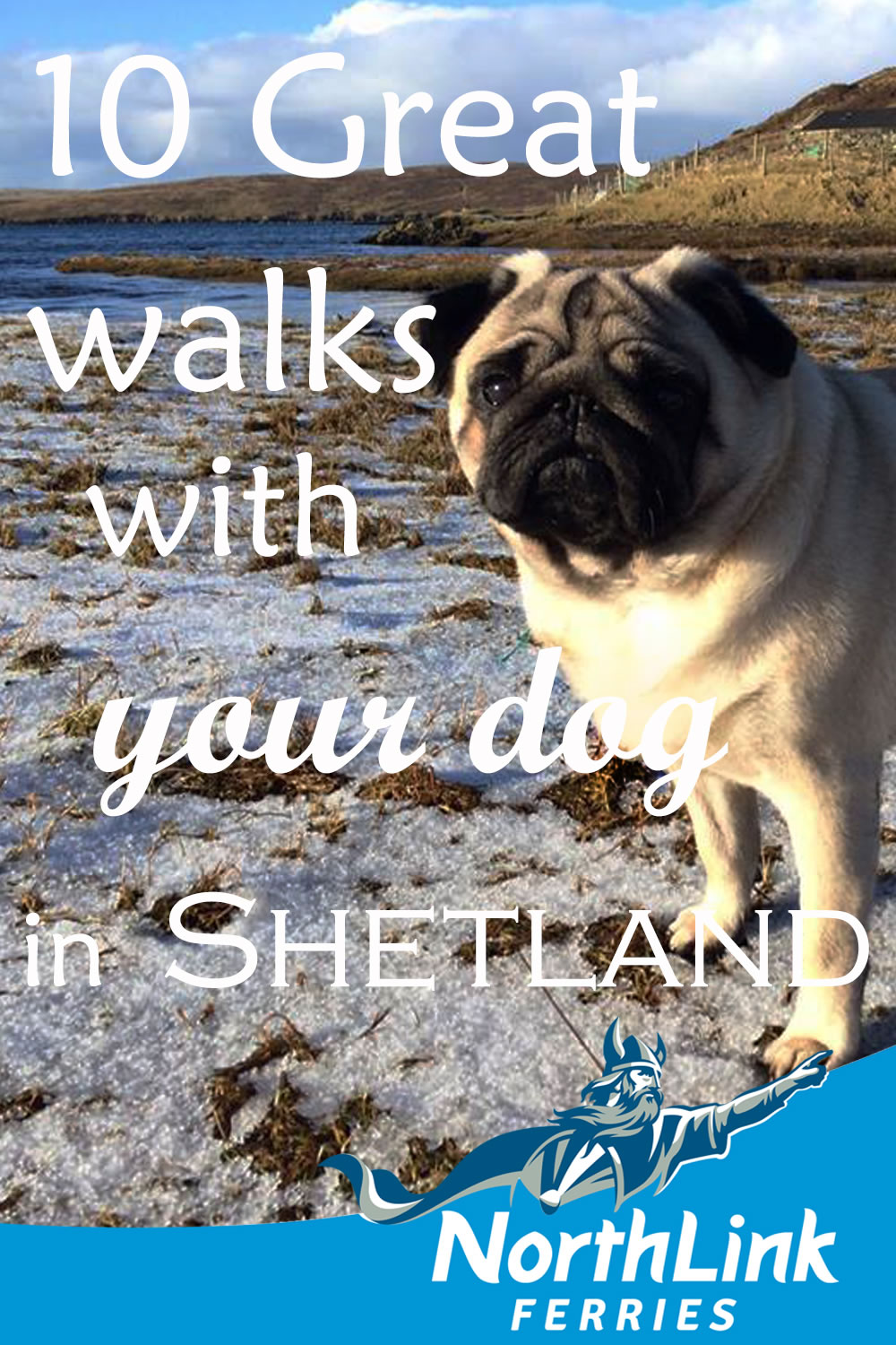 10 Great walks with your dog in Shetland
