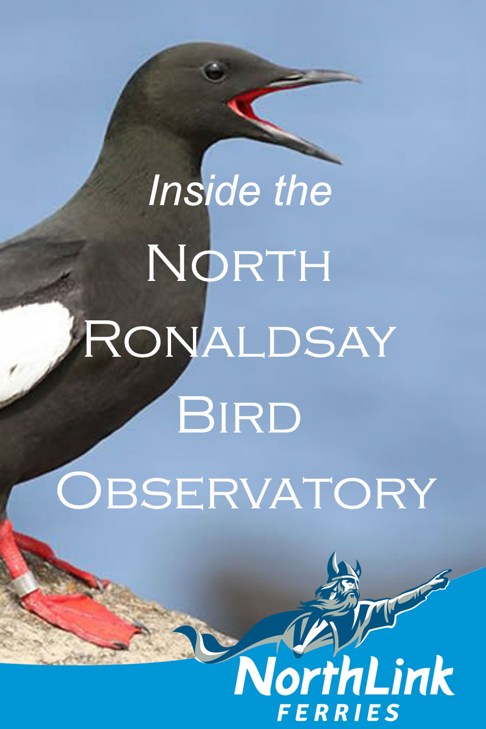 Inside the North Ronaldsay Bird Observatory