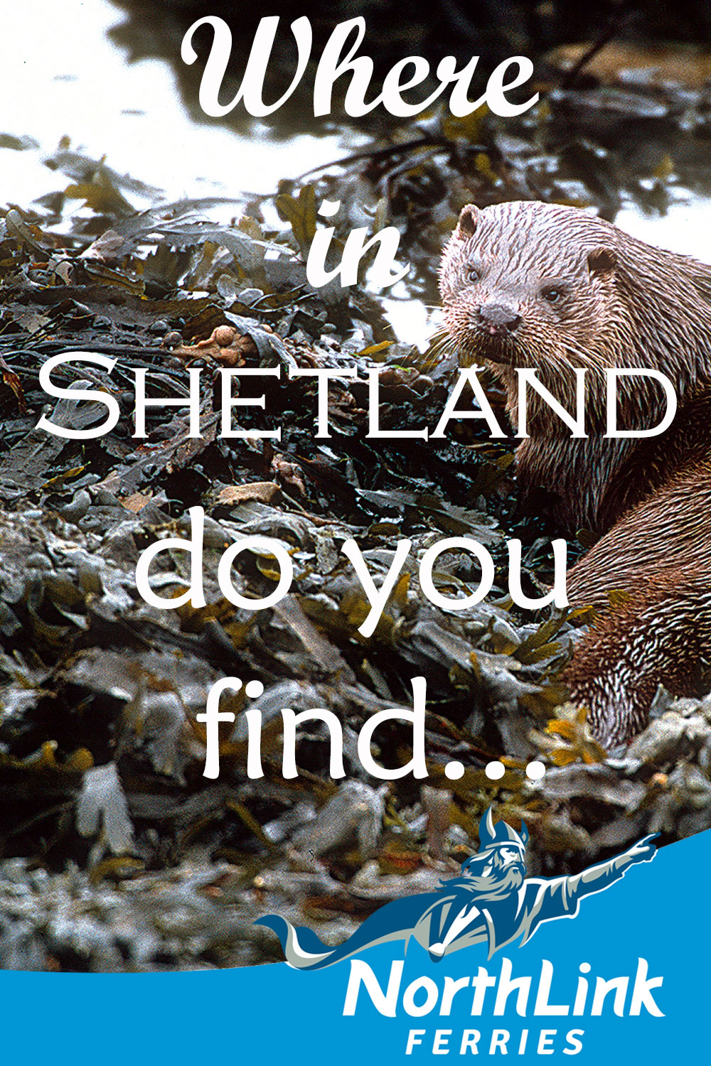 Where in Shetland do you find...