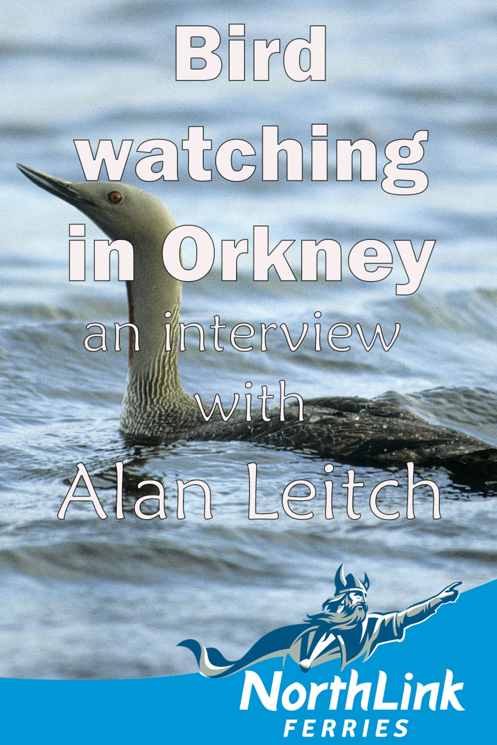 Birdwatching in Orkney - an interview with Alan Leitch