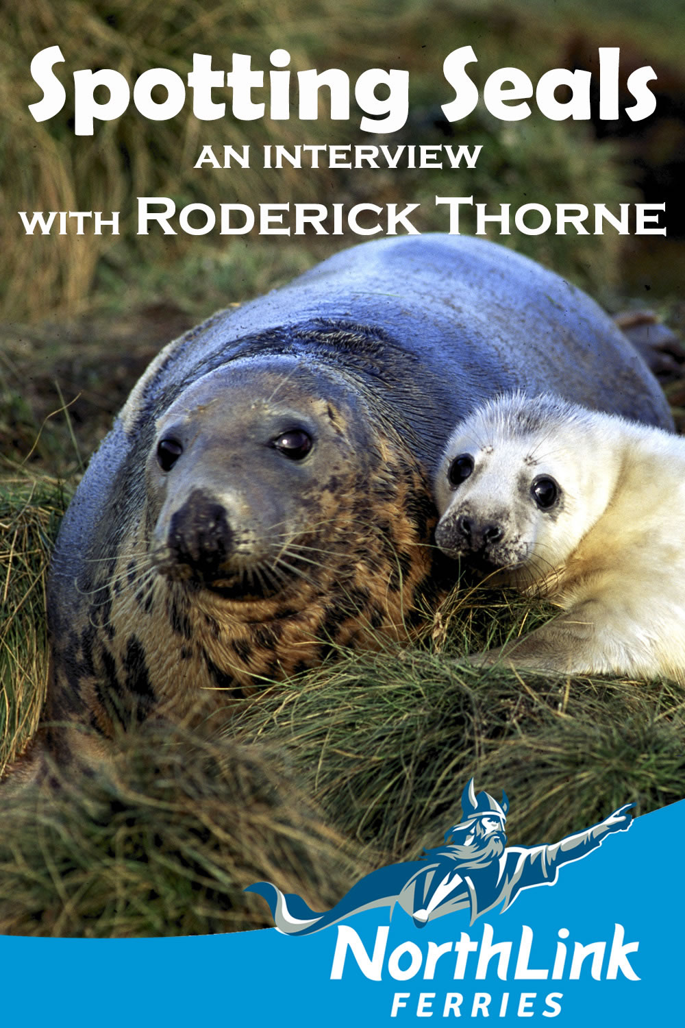 Spotting Seals - an interview with Roderick Thorne