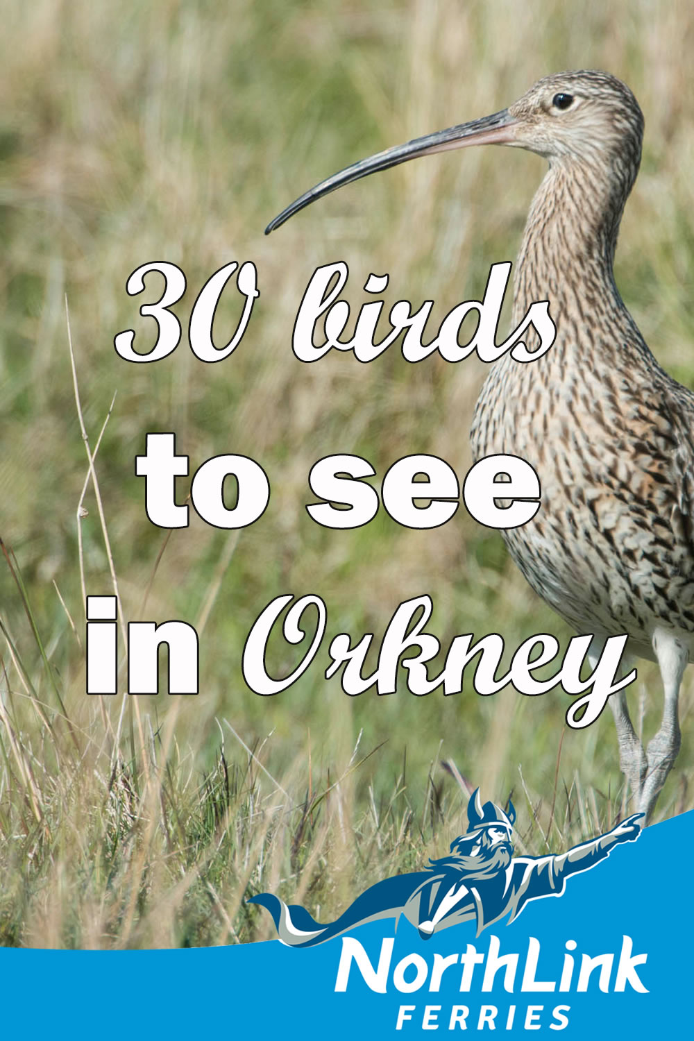 30 birds to see in Orkney