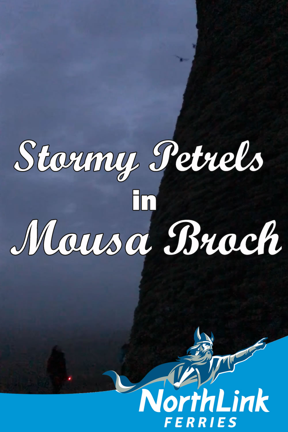 Stormy Petrels in Mousa Broch