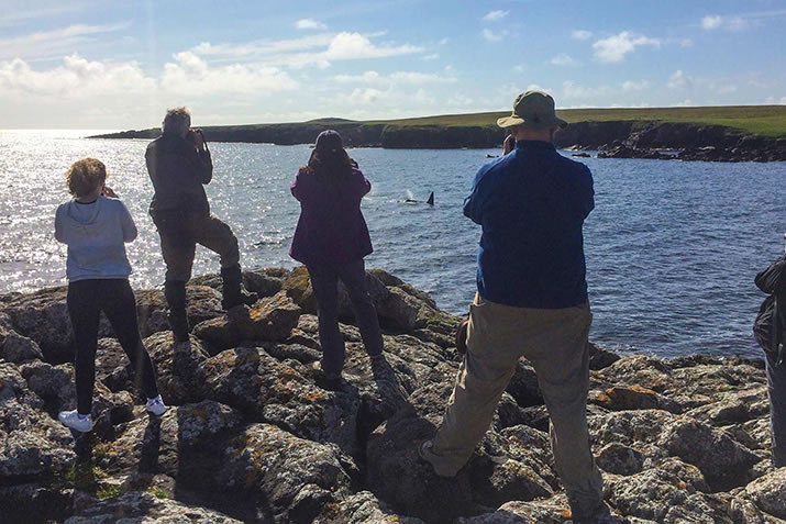 Our group watching Orcas by Michelle Harrop