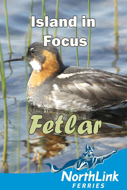Island in Focus - Fetlar