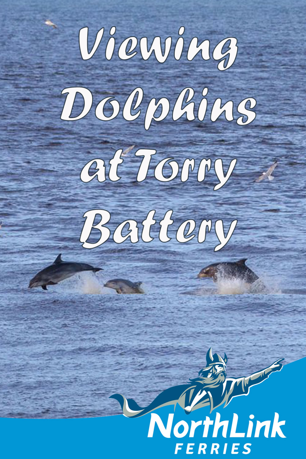 Viewing Dolphins at Torry Battery