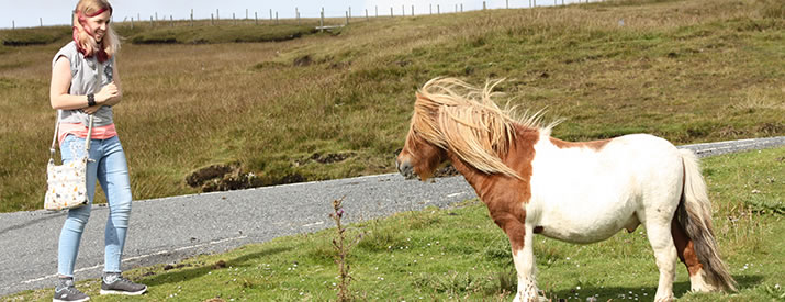 Ten fascinating facts about Shetland Ponies