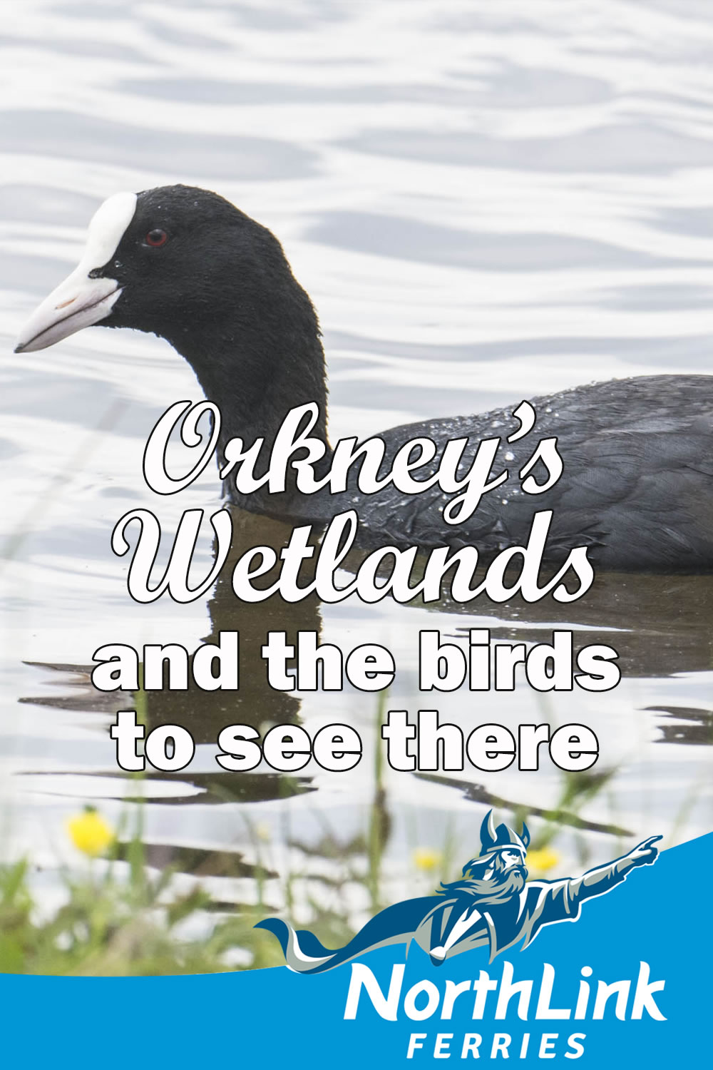 Orkney's wetlands and the birds there