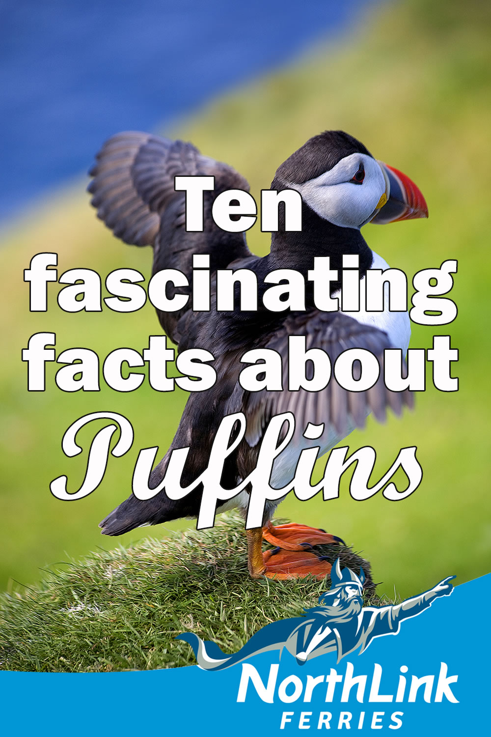 Ten fascinating facts about Puffins