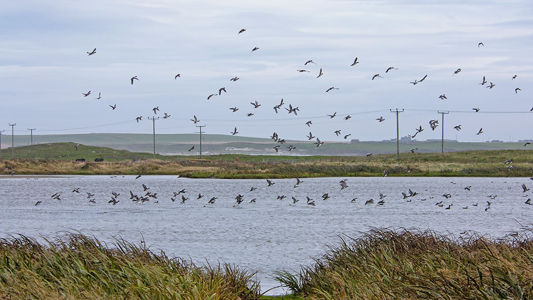 Loch of Rothiesholm, Stronsay, Orkney