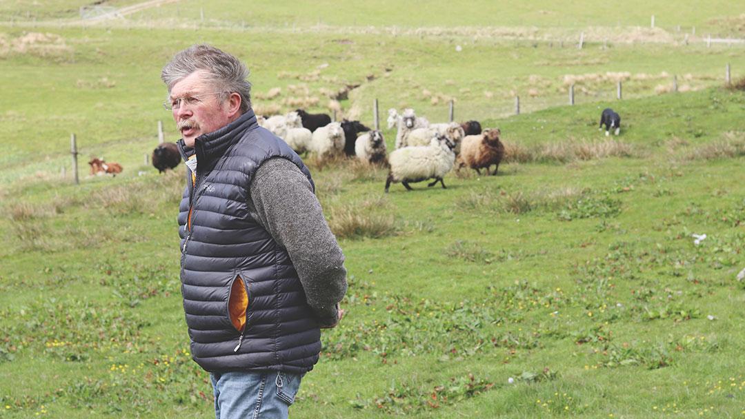 Ronnie Eunson and Shetland Sheep