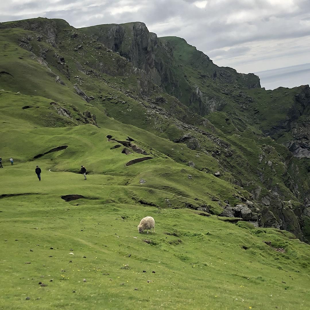 Hermaness in Shetland