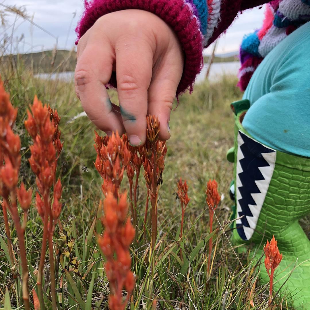 Shetland wildflowers