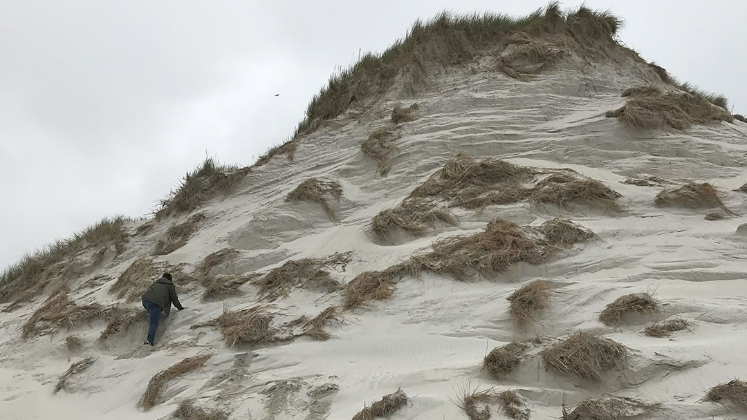 Climbing sand dunes at Tresness in Sanday, Orkney