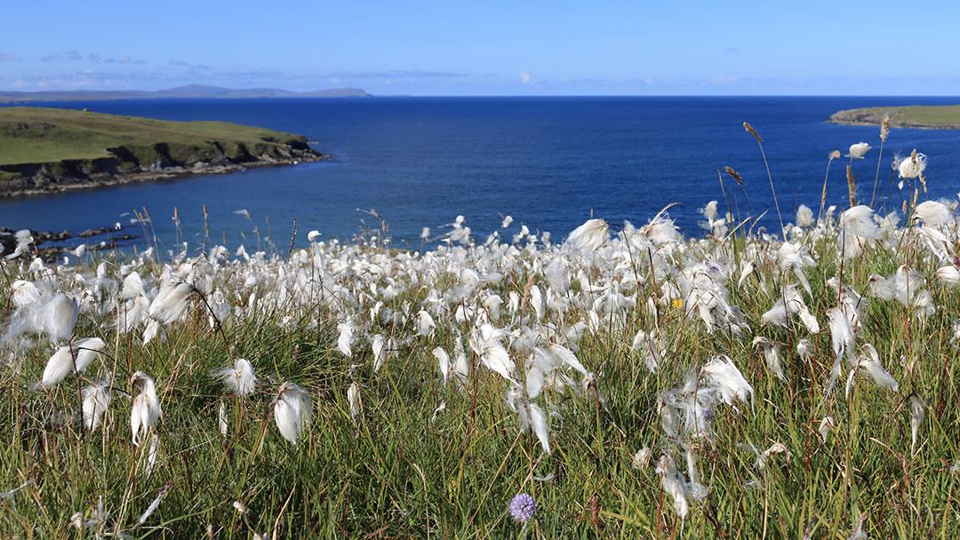 Fetlar, Shetland
